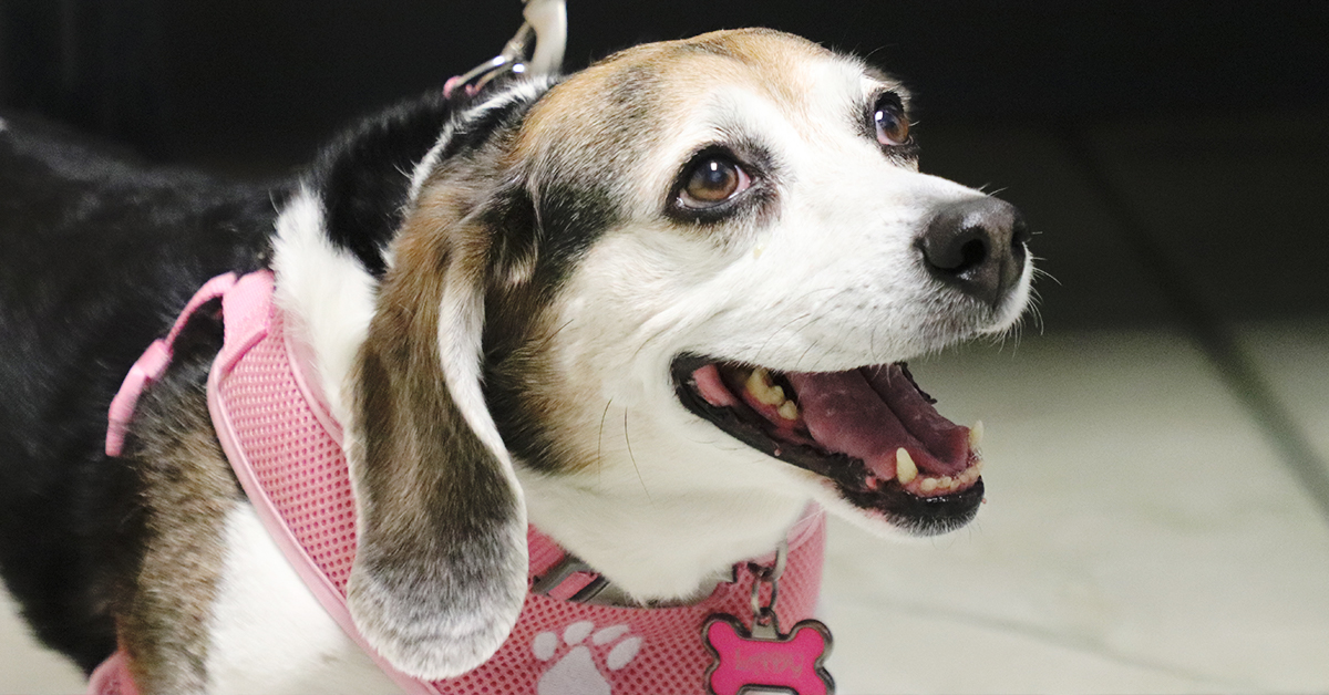 McAfee Animal Hospital is ready to care for your furry friends with their boarding services