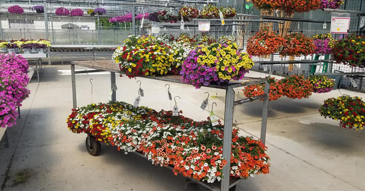 Behind-the-scenes at Bloom's Greenhouse Grower Outlet
