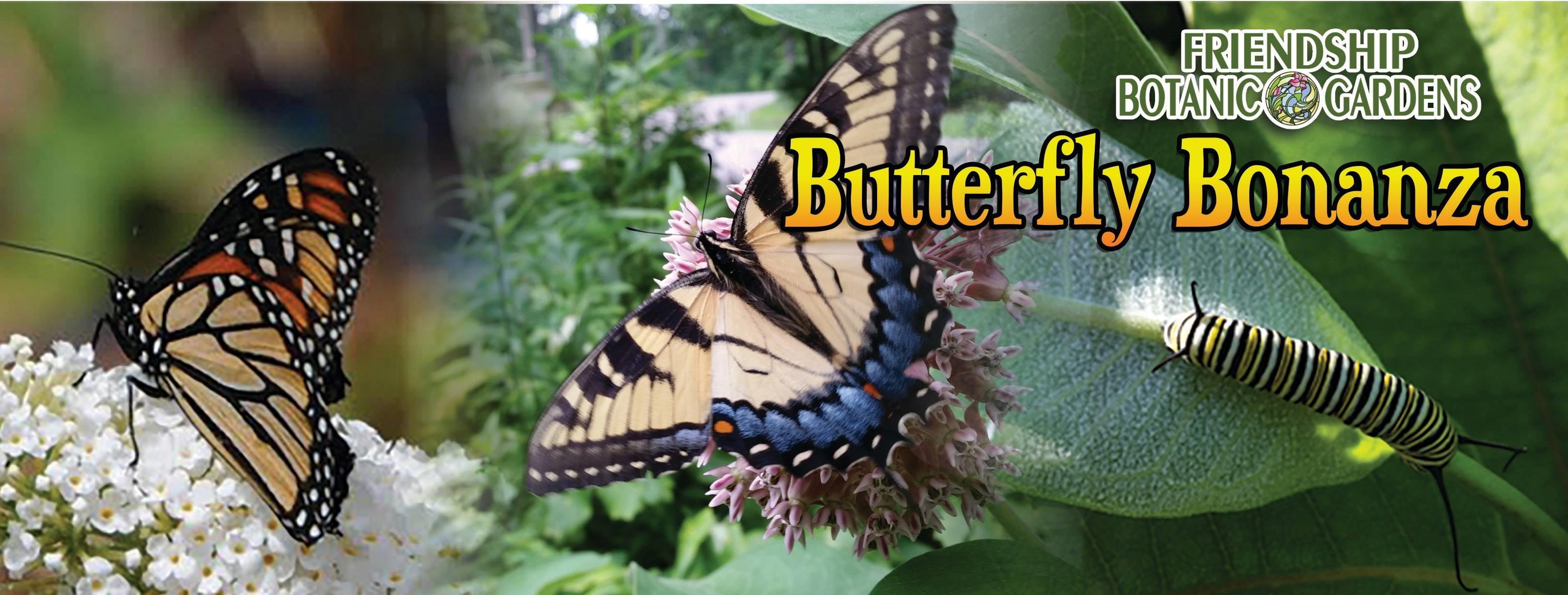 Butterfly Bonanza Returns to Friendship Botanic Gardens