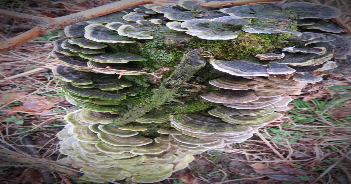 Guided Hike: Wild Mushrooms of Northwest Indiana