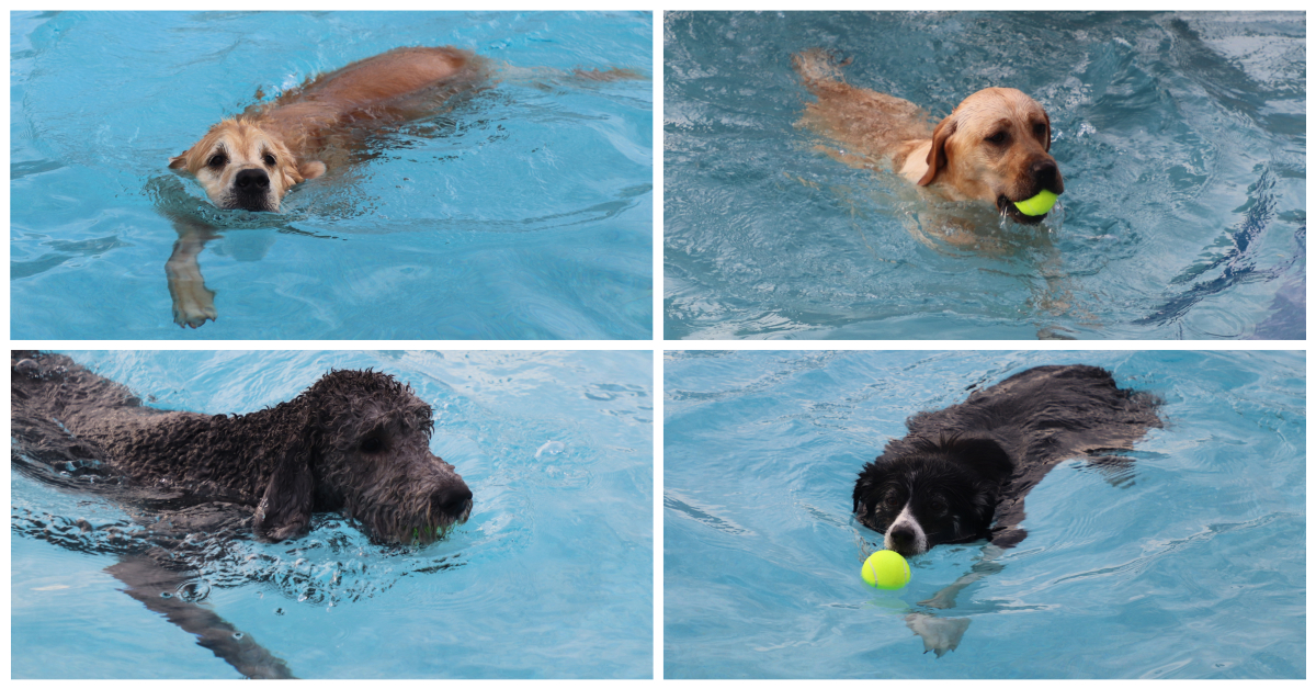 The dogs ruled the pool at The Lakes of Valparaiso's Puppy Plunge
