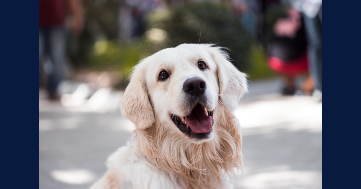 """""""Pet Peace of Mind"""" helps patients keep their pets"""