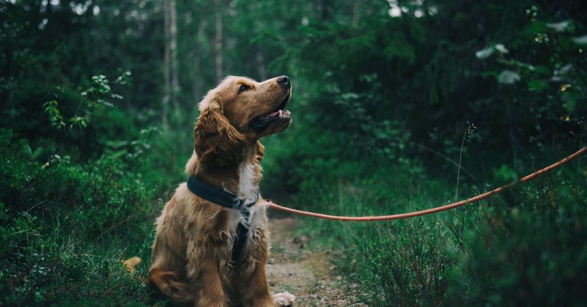 What you need to know about protecting your pet from fleas, ticks
