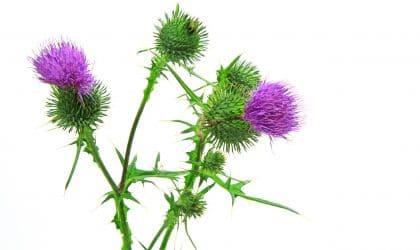 PermaGreen flowers
