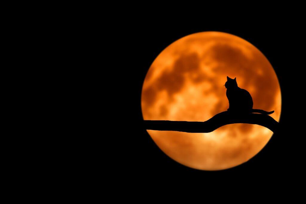 Halloween cat on tree
