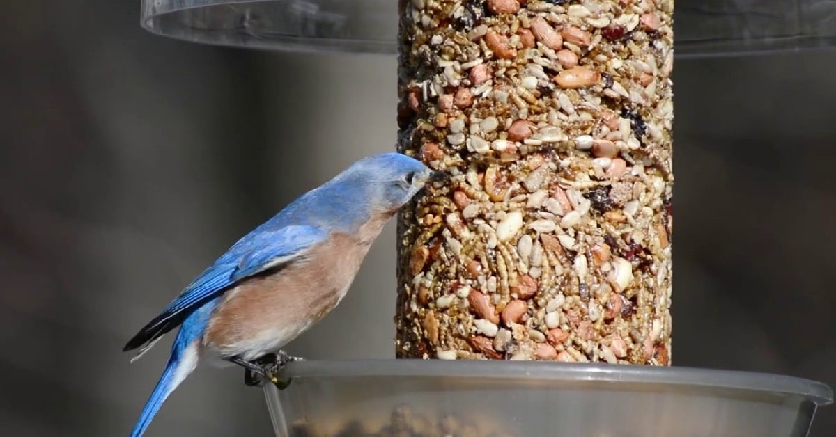 Wild Birds Unlimited finds growth in business through Flanagin's Bulk Mail Service