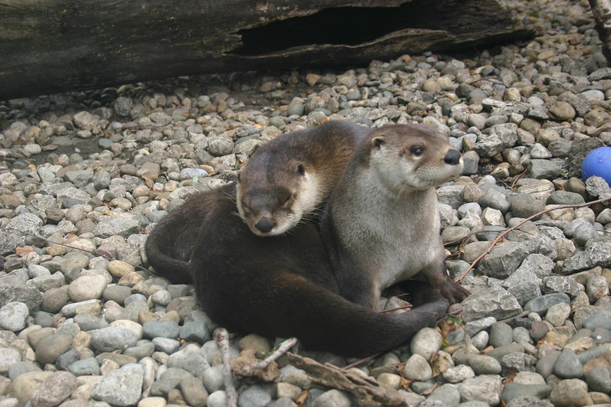 2017-otter-parents