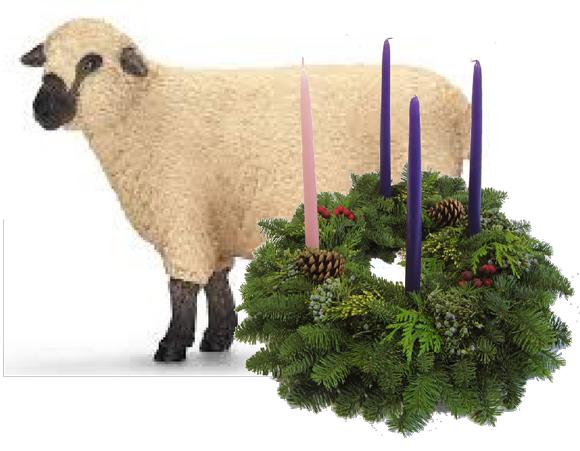 Advent-Sheep