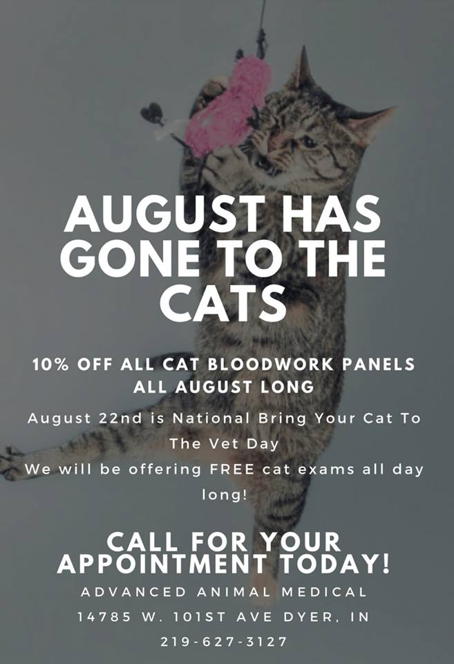 August-Has-Gone-to-the-Cats-at-Advanced-Animal-Medical-2018