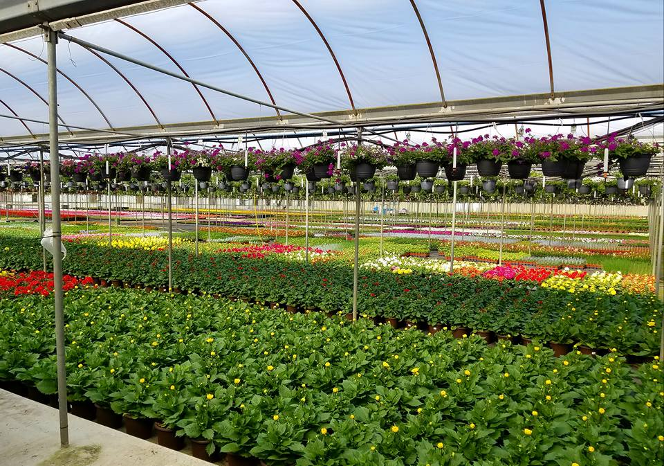 Get your career started in the greenhouse industry!
