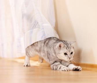 Chasing-Cat
