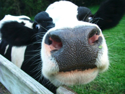 Culver's of Valparaiso Partners with Porter County 4-H Dairy Project to Make a Difference in 2016