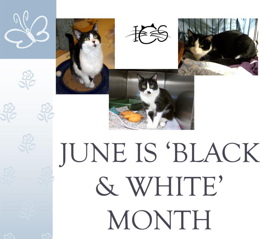 ics-black-and-white-month