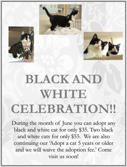 June-2013-Adoption-Promo