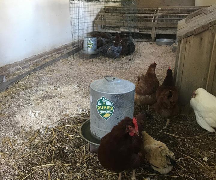 New-Chellberg-Farm-Family-is-Making-the-Farm-Cool-Again-2017_02
