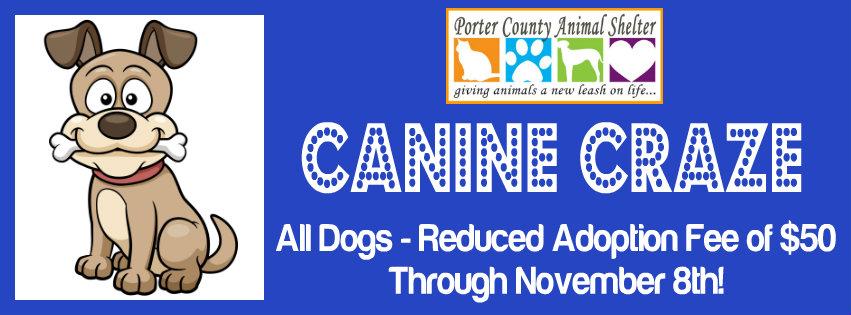 pc-animal-shelter-canine-craze