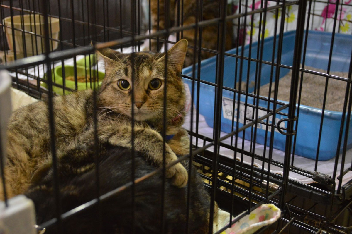 Pets Get Second Chance at Better Lives in 2017