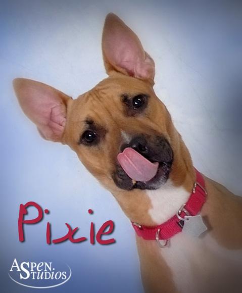 Pixie-2