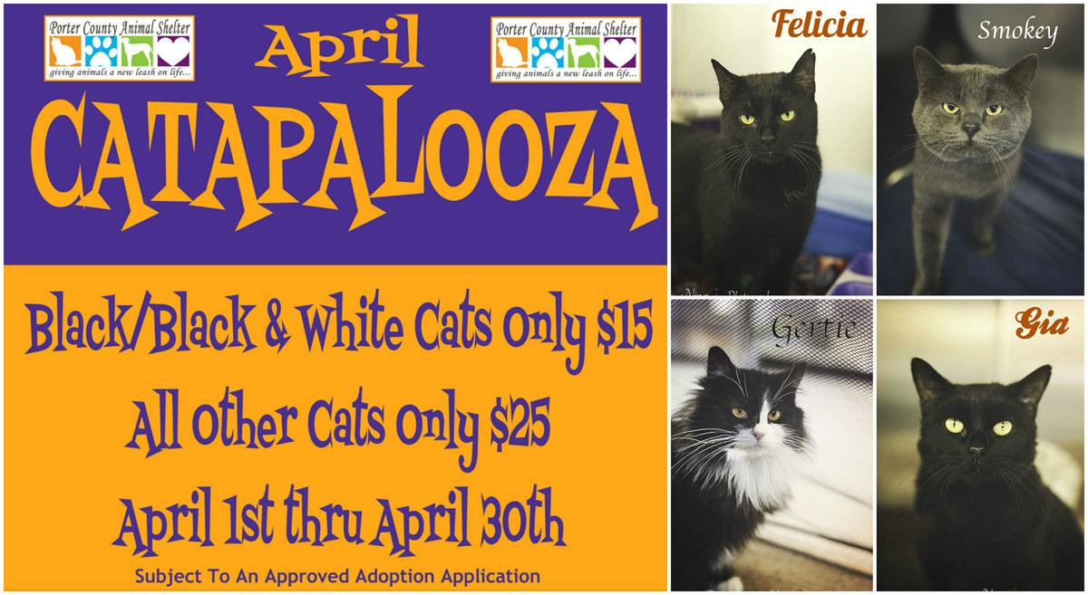 Porter-County-Animal-Shelter-April-Catapalooza-2015