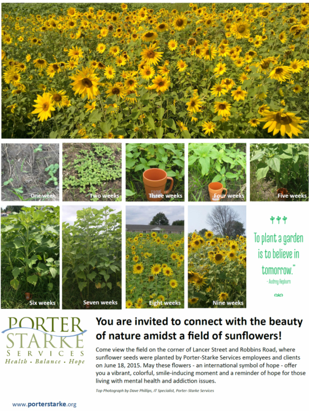 Porter-Stark-Sunflowers-2015