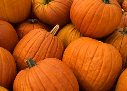 Kids Invited to Decorate a Pumpkin with Dyer Parks