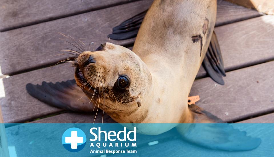 Shedd-Aquariums-Animal-Response-Team-Joins-International-Dolphin-Rescue-Effort-2019
