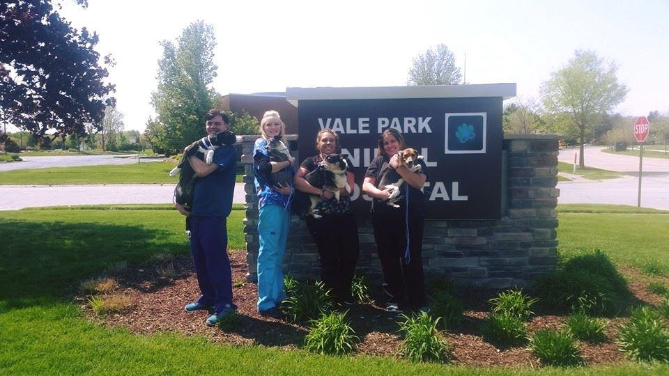 Vale-Park-Lakeshore-PAWS-2017_02